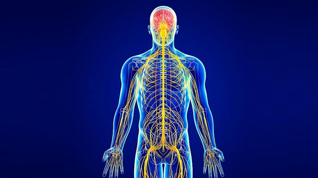 Лечение и профилактика заболеваний нервной системы в санатории Лесные озера
