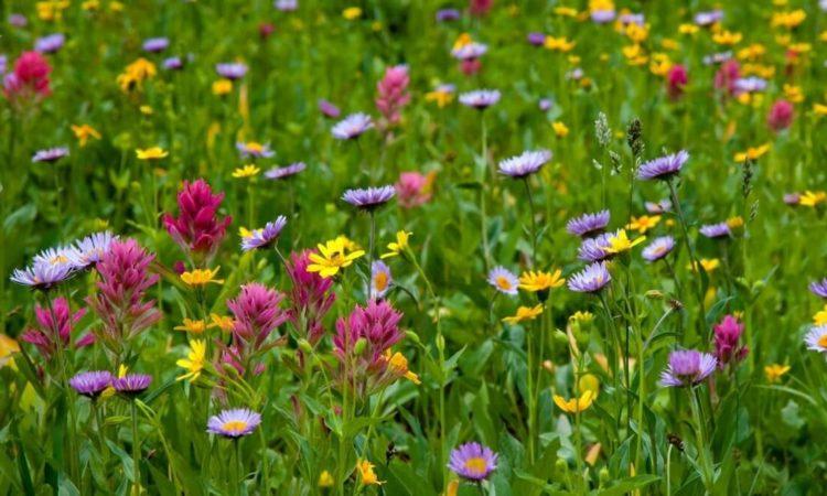 Луг с цветами и полезными травами фото