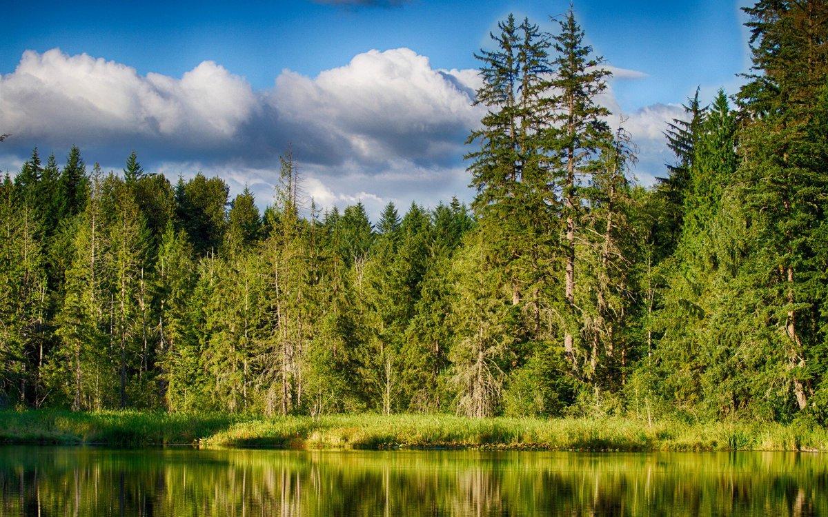Климатолечение в санатории Лесные озера