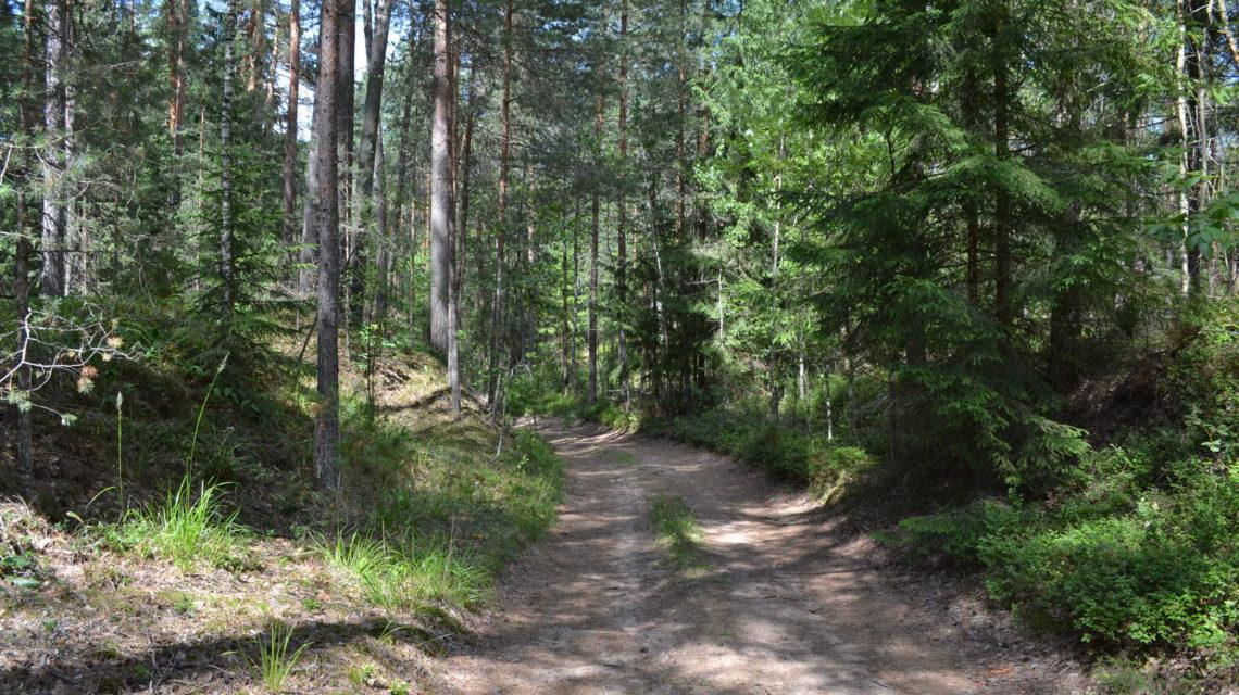 лес в санатории Лесные озера