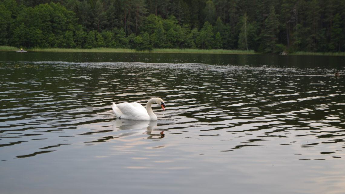 местная фауна санаторий Лесные озера