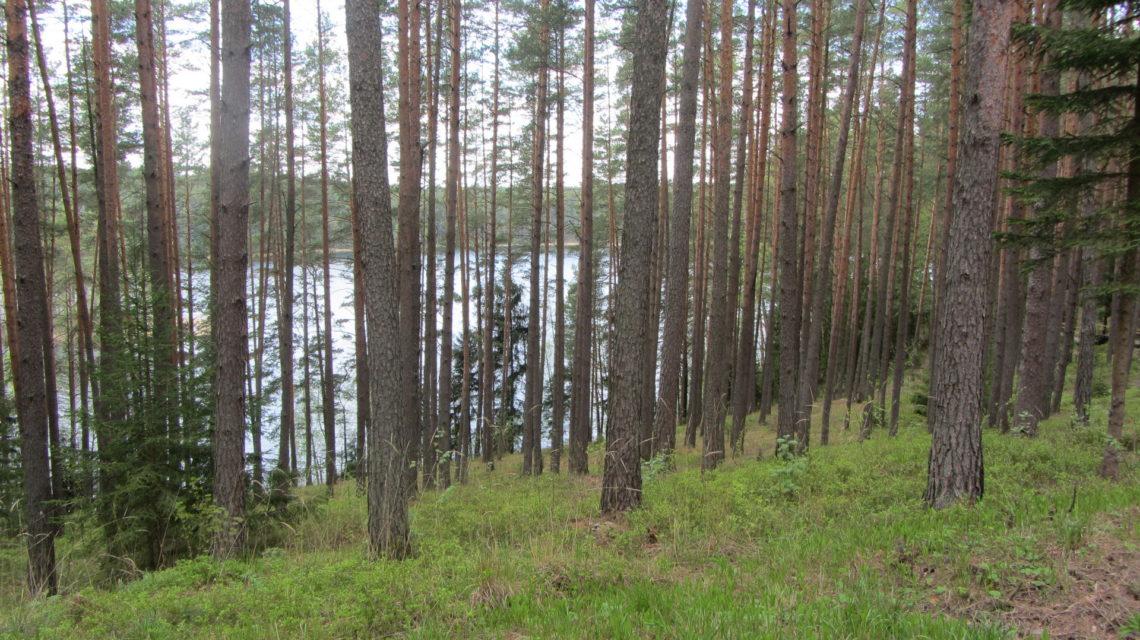 разнообразие флоры санаторий Лесные озера