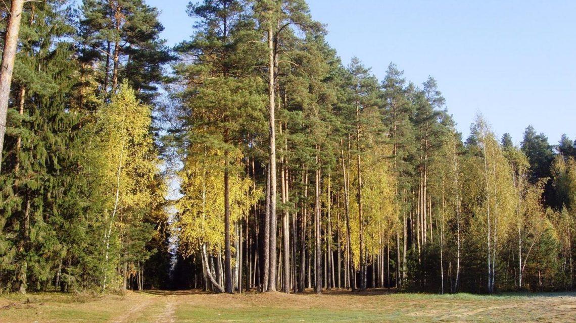 осенний пейзаж в санатории Лесные озера